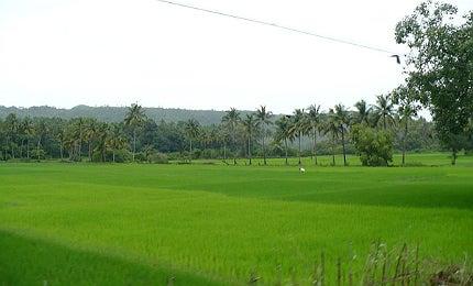 Goa rural